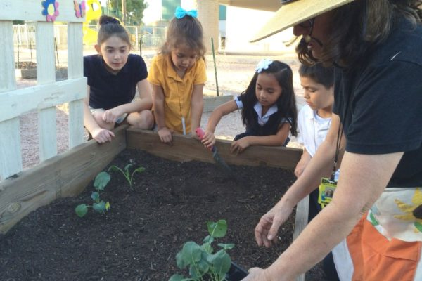 Grant opportunity: Start a garden or wildlife habitat at your local school